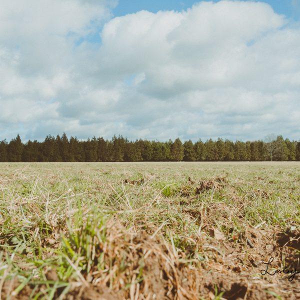 Fiesta Fields